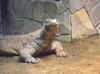 Zoo_002